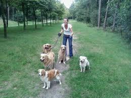 honden-uitlaten